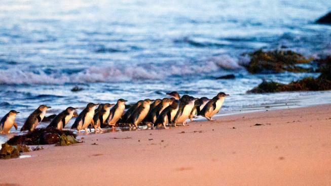 Proč není sever Austrálie ideální plážová destinace?