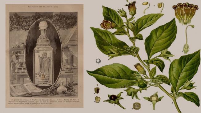 belladonna-poison v