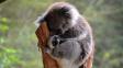 Proč koala prospí většinu života