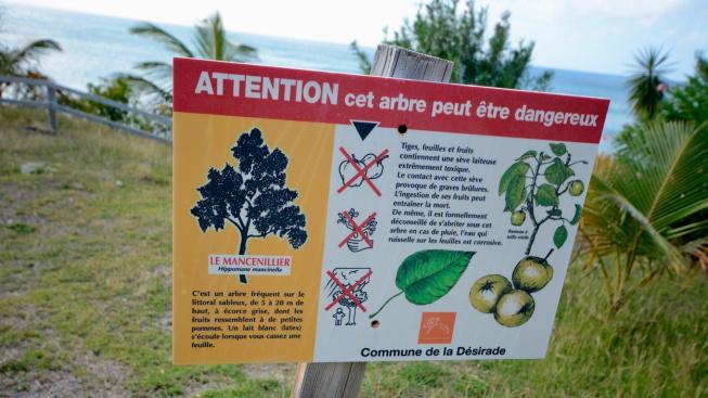 Stromy jsou opatřeny výstražnými cedulemi