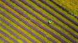Z voňavé fialové záplavy dýchá pohoda a klid