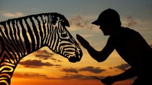 Malá, malá, hodná zebra...