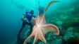 Zápas s chobotnicí: Podivný sport, který se neujal