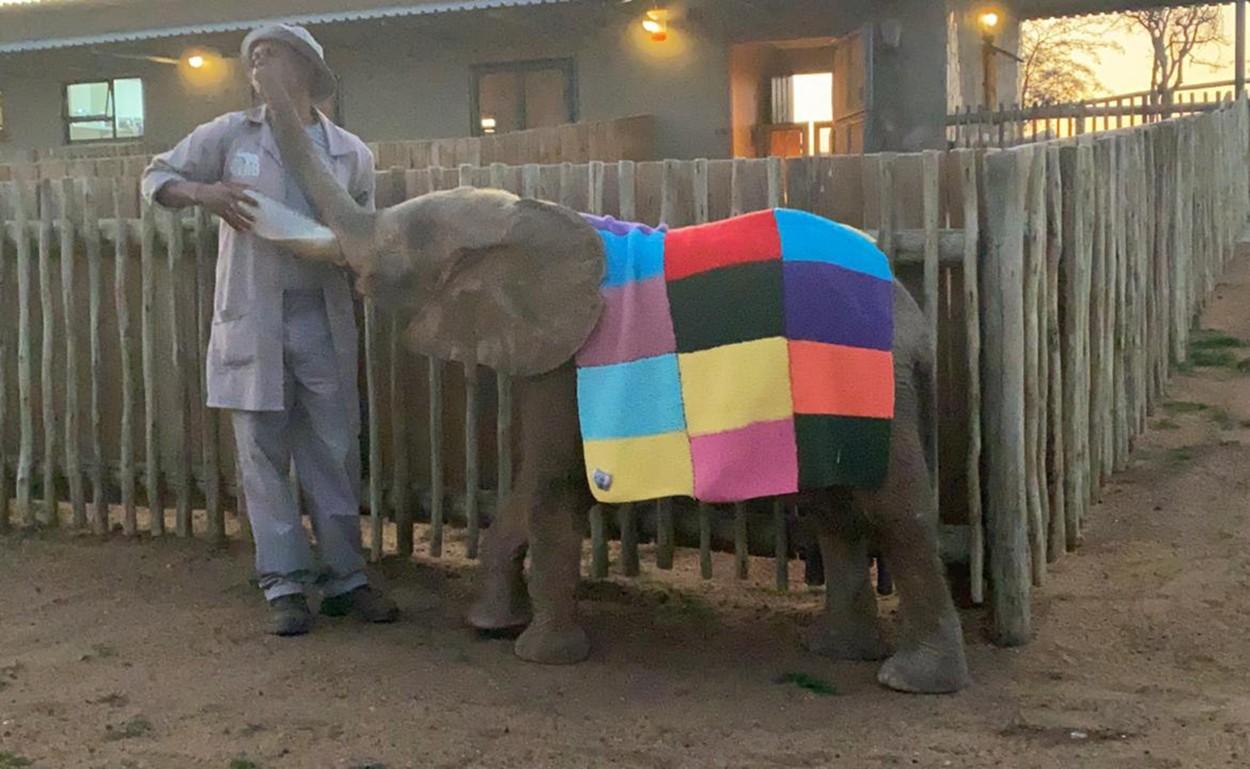 Patchworkový slon