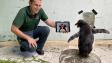 Pochroumaný tučňák miluje seriál Pingu