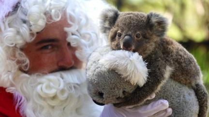 Santa si pospíšil a mláďatům naděloval den předem