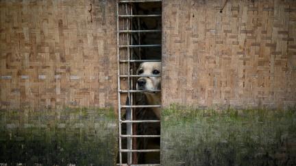 Stovky potulných hafanů našly u čínské babičky nový domov a ochranu