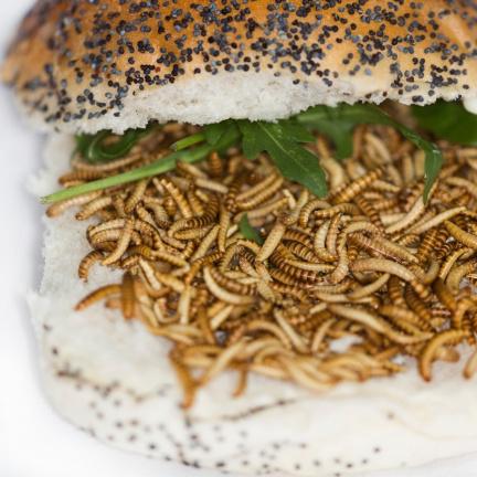 Nechte si chutnat: Mouční červi byli v Evropě schváleni ke konzumaci