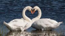 Srdce v přírodě