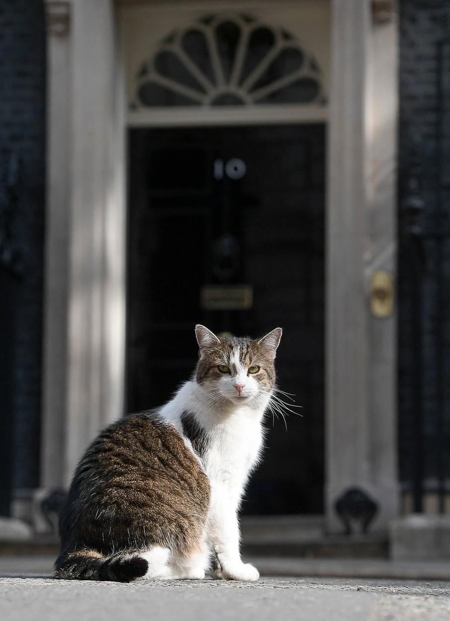 Premiérský kocour Larry