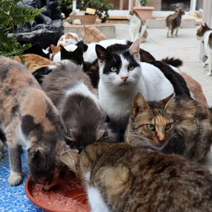 Z Kypru se kvůli pandemii stalo odkladiště opustěných koček