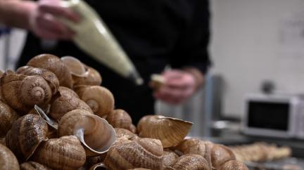 Francouzská delikatesa je v ohrožení. Zavřené restaurace decimují chovy šneků
