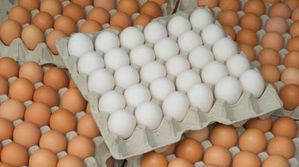Kdy jsou vejce bílá a kdy hnědá?