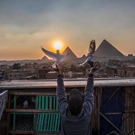 Válkám navzdory. Blízký východ se tradice holubářství nehodlá vzdát