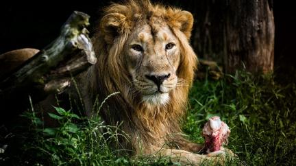 Safari v srdci Evropy slaví 75 let od otevření