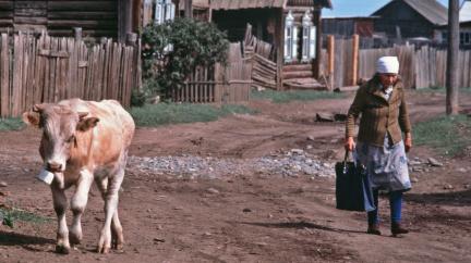 Angelo, postavte nám silnici, prosí Merkelovou zoufalí ruští vesničané