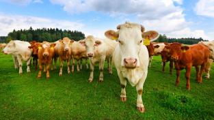Ruská veterinární a fytosanitární služba zakázala dovoz krmiv a přísad do krmiv z České republiky, oznámila ruská tisková agentura TASS (Ilustrační foto)