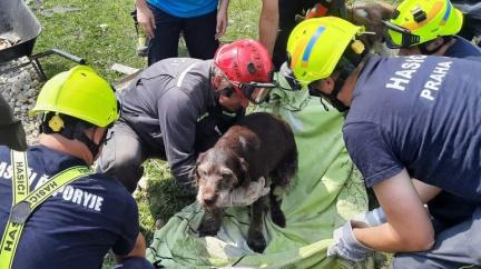 Hasiči ze sutin po tornádu vyprostili živého psa
