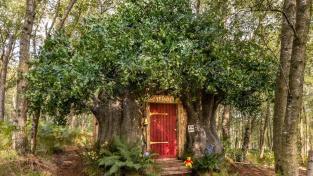 Domeček ve stromě a hrnečky plné medu. Žijte jako Medvídek Pů
