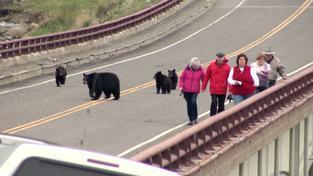 Návštěvníci před medvědy neutíkali, ale fotili si je