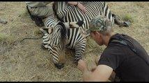 Safari: Trailer