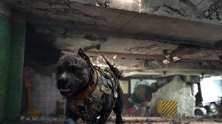Call of Duty: Black Ops 4 - Trailer na multiplayerovou betu