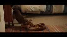 Psí domov: Trailer 2