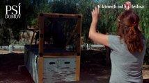 Psí domov: Film o filmu (S Bellou na place)