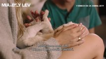 Mia a bílý lev: Jak se točí se lvy bez triků