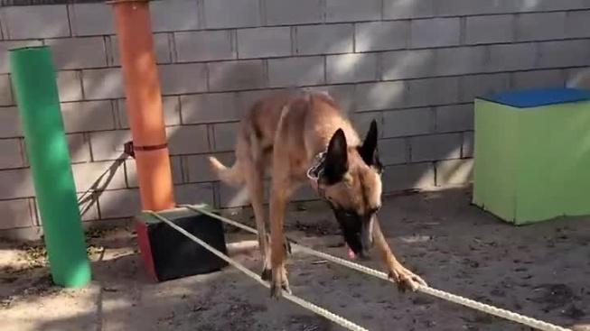 Neuvěřitelný Monkey - pes, před kterým neobstojí žádná překážka