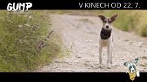 Gump - pes, který naučil lidi žít - Kniha versus film