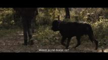 Smrt ve tmě 2 (2021) - trailer (české titulky)